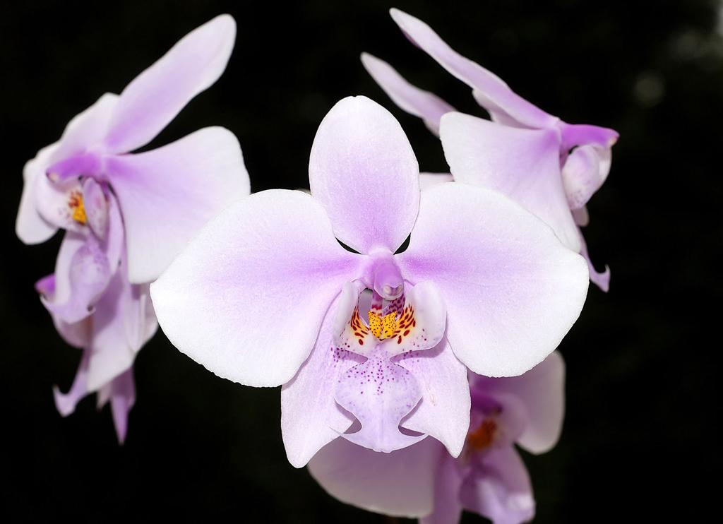 Piante da appartamento casa del fiore di salvatore di - Orchidee da appartamento ...